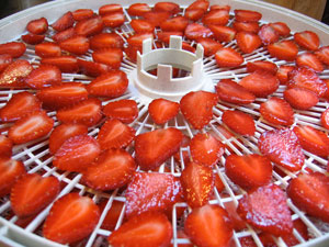 strawberries-in-dehydrator