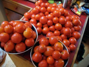 57-pounds-of-tomatoes