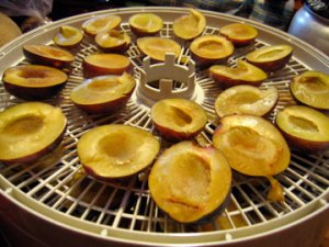 dehydrating-plums